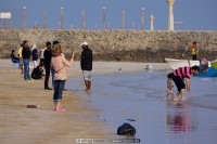 iran beaches